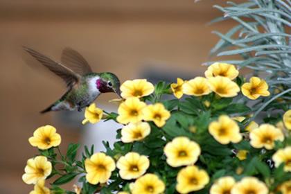 Wild Birds Images Wild Bird Supplies